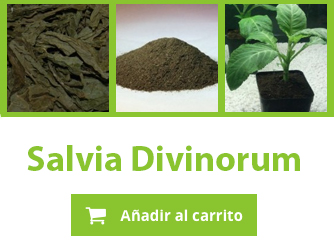 Comprar Salvia Divinorum